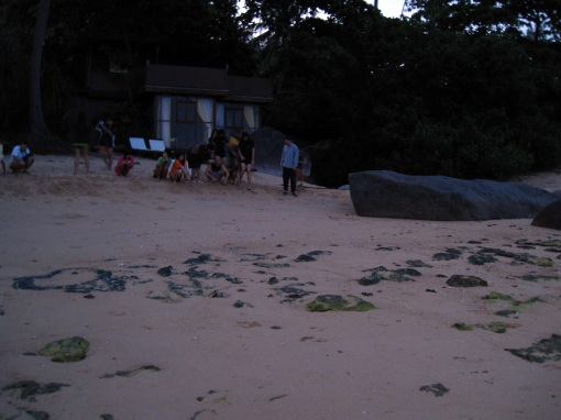 RGS Releasing Hawksbill Hatchlings at dawn.